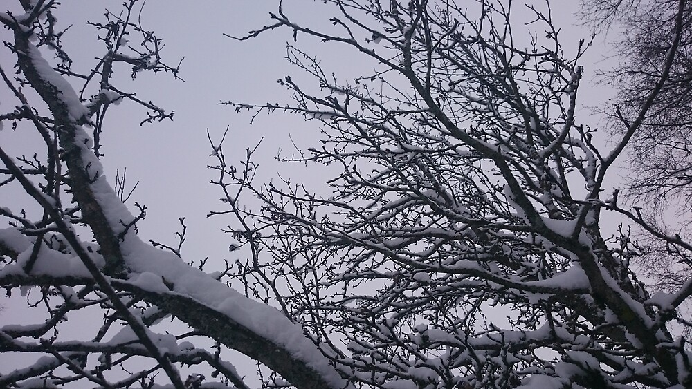 Apple Tree Branches with Snow by svehex