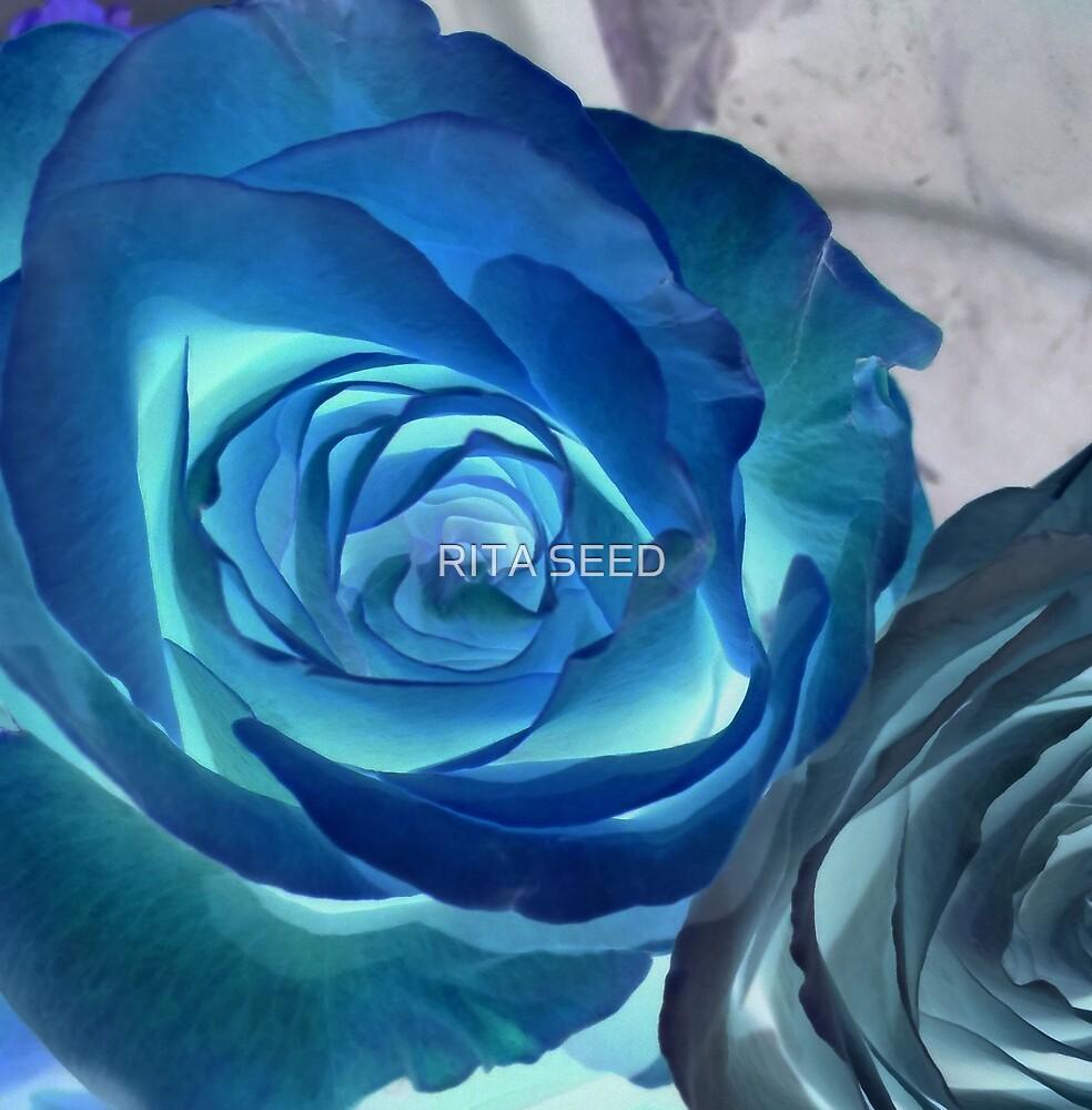 Blue Rose II by RITA SEED