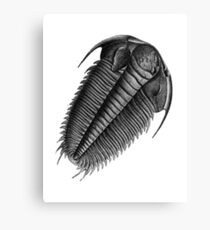 The Fossil Canvas Print