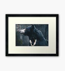 Sloth Bear Framed Print