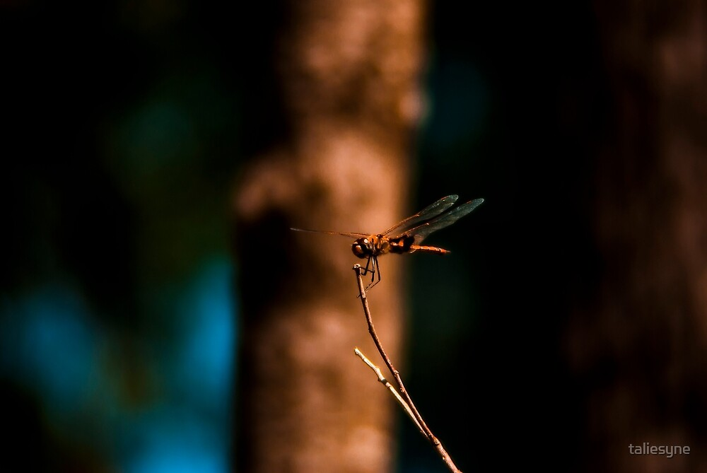 Dragonfly 1 by taliesyne
