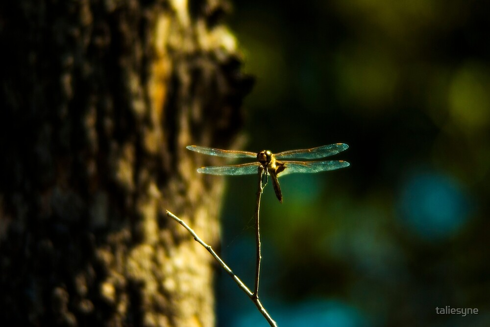 Dragonfly 2 by taliesyne