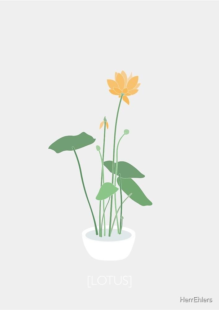 lotus by HerrEhlers