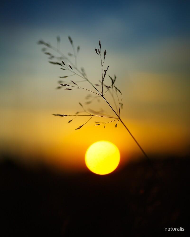 Selective focus sunset by naturalis