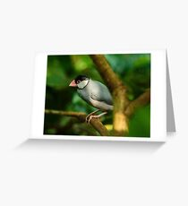 Java sparrow on a branch Greeting Card