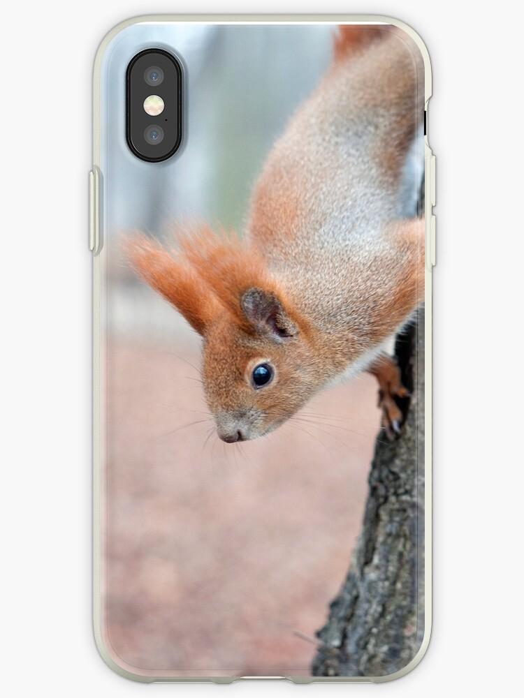 Peek-a-boo squirrel by stuwdamdorp