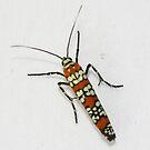 Ailanthus Webworm Moth by Alice Kahn