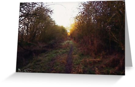 The Old Railway Line 3 by Mark Salmon