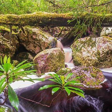 Double cascade, Mackintosh Creek, Tasmania by belvoir