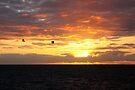 Flying to the Sun by Jo Nijenhuis