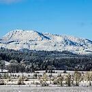 Marys Peak, Oregon by George I. Davidson