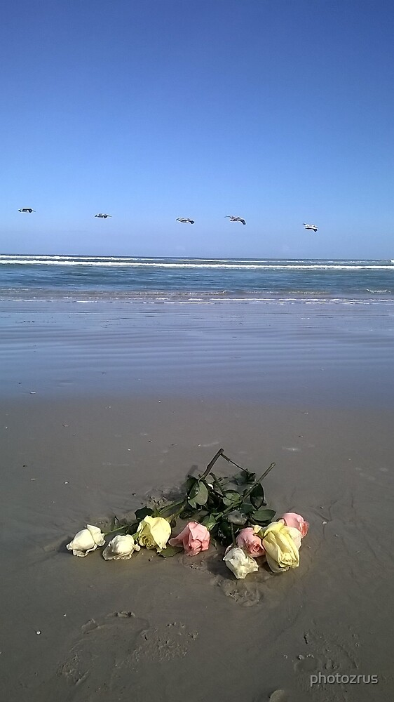 Pelicans over Roses in the Surf New Smyrna Beach Florida by photozrus