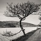 A Winter tree by Martina Fagan