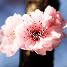 Spring Is Here by Evita