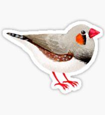 Watercolour Zebra Finch Sticker