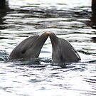 Dolphin Play by Johnny Furlotte