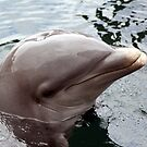 Dolphin by Johnny Furlotte