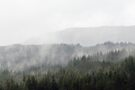 Mist and rain floats across trees in the Scottish Highlands by Richard Flint