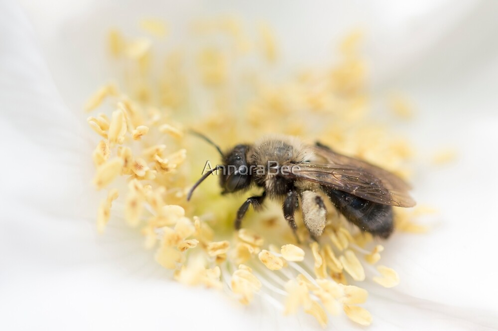 Andrena on White by AnnoraBee