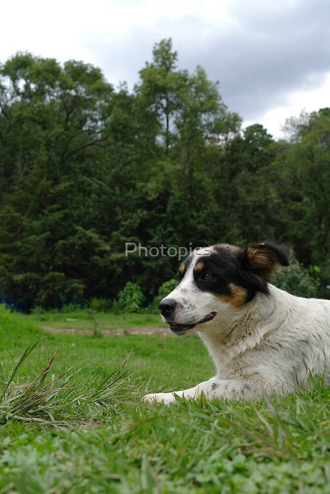Nature n Dog by Photopics