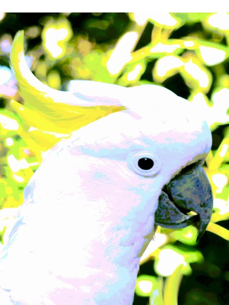 Sulphur-crested Cockatoo by koalajanine