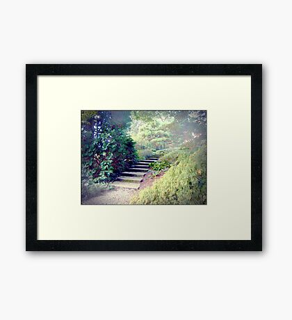 A Day At The Arboretum #2 - The Ascent Framed Print