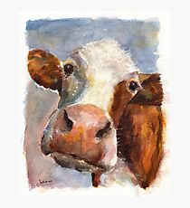 Melancholy Cow Photographic Print