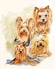 Yorkshire Terrier /Ghost by BarbBarcikKeith