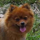 Pet Dog by lezvee