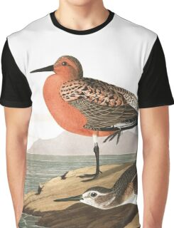 Red Knot - John James Audubon Graphic T-Shirt