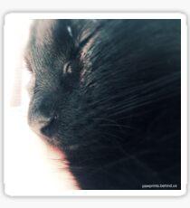 Peaceful Kitten Sticker
