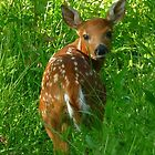 The Fawn by Mary Kaderabek-Aleckson