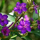 purple... by Wieslaw Jan Syposz