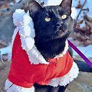 Is Santa Coming Soon? by Jane Neill-Hancock