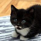 Kitten by Johnny Furlotte