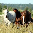 Horses in Pasture by Johnny Furlotte