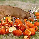 Deer and pumpkins by Maryna Gumenyuk