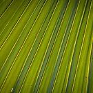 Corrugations by Thaddeus Zajdowicz