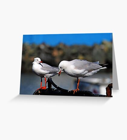Seagulls Waiting For Lunch Greeting Card
