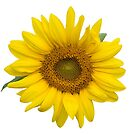 Sunflower Thoughts on a Winter Day by Bonnie T.  Barry