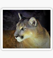 Cougar's Gaze Sticker