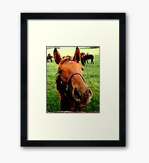 Horse Greeting, Equine Photography  Framed Print