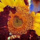She Found Her Heart In A Sunflower by Clare Colins