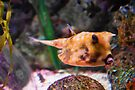 Unique Looking Fish by Barberelli