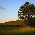 Simons Seat from Appletreewick by Dan Shalloe