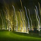 Dancing Lights on a Green Field by FTML