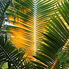 Golden palm by Fizzgig7