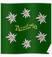 Edelweiss Austria Poster