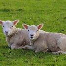 Early Lambs by peaky40