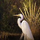 Great Egret by Rich Summers